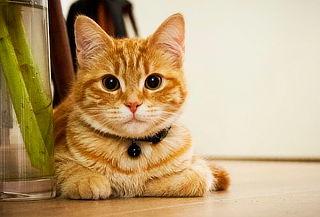 Spa Baño y Peluquería Para Perros y Gatos + Obsequio