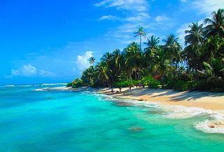 Tour a Johnny Cay + Tour Acuario + Mantarrayas + manglares