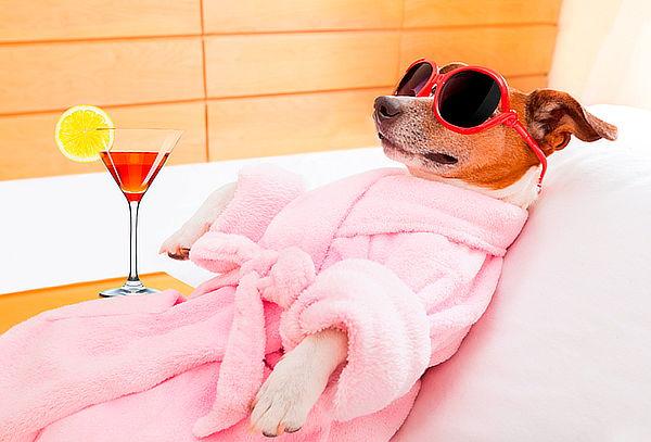 Spa, Baño y Peluquería Para Mascotas a Domicilio