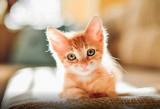 Esterilización para Gatos y Perros Machos hasta 40 kls