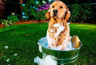 Spa, Baño y Peluquería Para Perros o Gatos