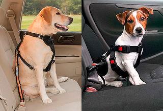 Cinturón de Seguridad Perro Grande y Pequeño