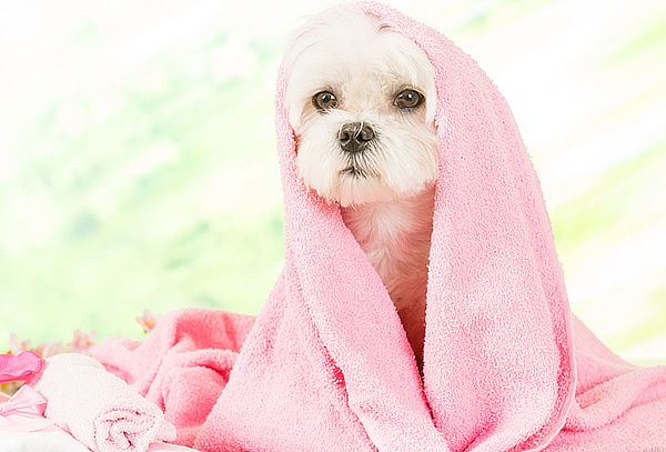 Jacuzzi, Baño + Peluquería para Mascotas