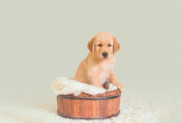 Spa, Baño y Peluquería para Mascotas hasta 10 kls