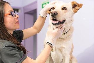 2x1 en Consulta Veterinaria + Examen Otoscopico y más