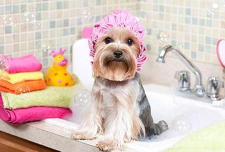 COMBO: Spa para Perros o Gatos + Profilaxis y Anestesia