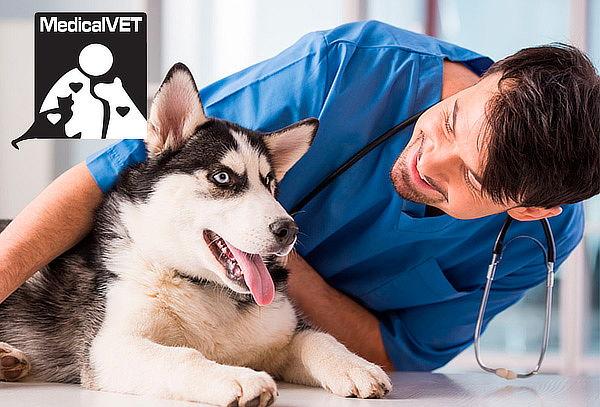 Esterilización para Perros  en Cedritos