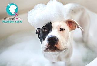 Baño Completo + Corte para Perros