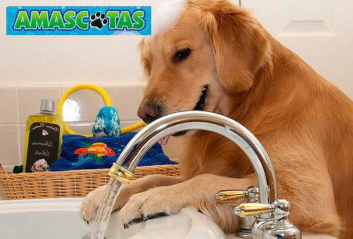 Baño Espumoso para Perros en Cedritos
