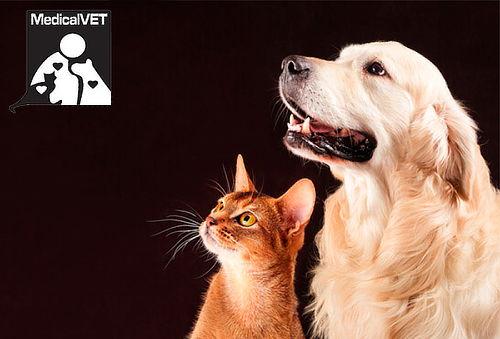 Profilaxis para Gatos y Perros en Cedritos