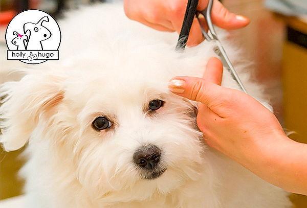 Curso Online de Peluquería Canina