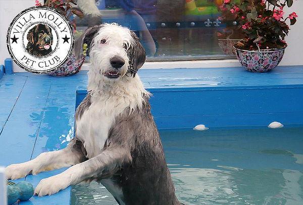 Membresía Villa Molly Pet Club con 3 Baños y más