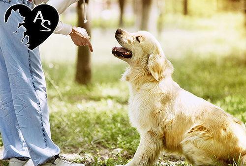Microchip, Carnet, Placa para Tu Mascota a Domicilio