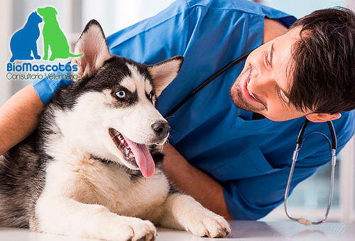 Consulta Veterinaria para Perro + Domicilio