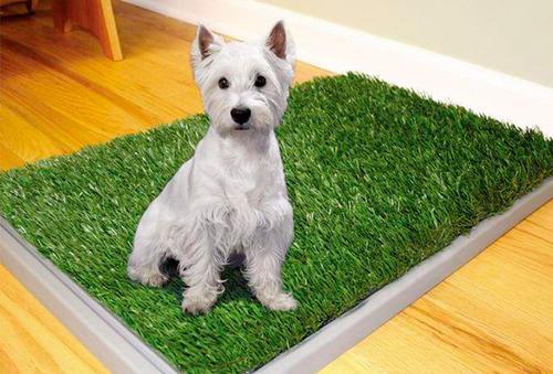 OUTLET - Tapete Baño Cuponatic Entrenamiento Para Mascotas