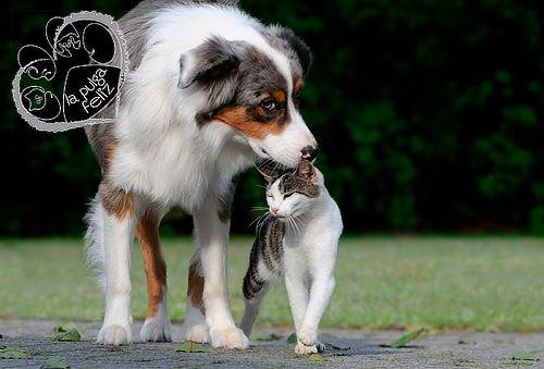 Antipulgas, Desparacitacion y Consulta para tu mascota