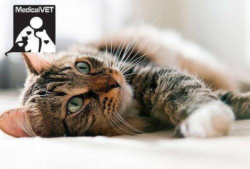 Esterilización para Gatos en Cedritos