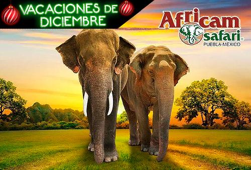 Africam Safari, Excursión de 1Día con Transporte ¡Avetura!