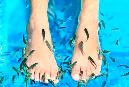 Sesión de Fish Spa Ictioterapia + Pedicure