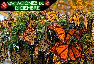 Mariposa Monarca y Valle de Bravo ¡Un lugar Mágico!