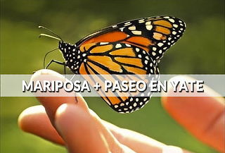 Mariposa Monarca + Yate en Valle ¡Único, diferente,completo!