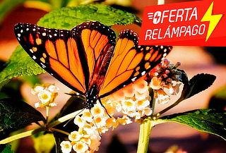 OFERTA RELÁMPAGO: Mariposa Monarca, Valle de Bravo y más