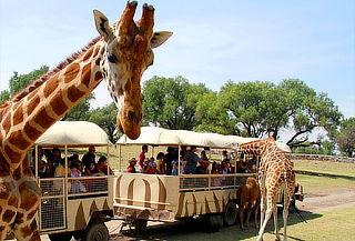 REINO ANIMAL ¡El Mejor Parque Temático de Teotihuacán!