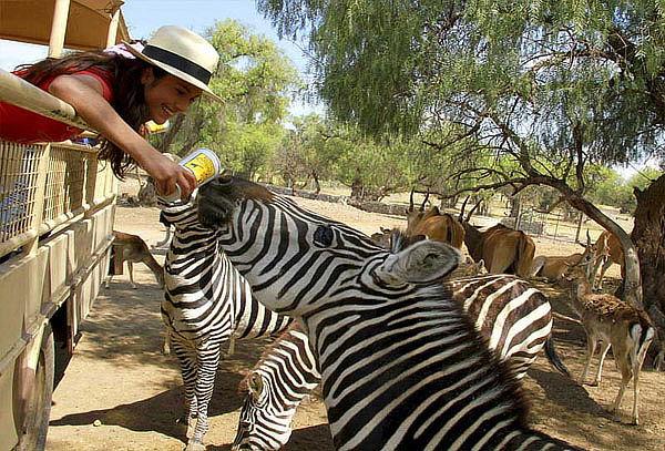REINO ANIMAL ¡El Mejor Parque Temático Teotihuacán!