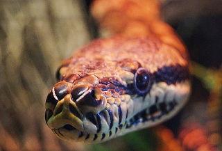 Accesos a Granja las Américas + Serpientes
