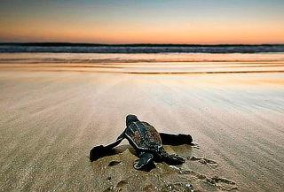 Liberación de tortugas Express en Tecolutla +Transportación