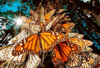 Mariposa Monarca + Centro ceremonial OTOMI