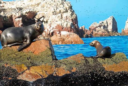 ¡FERIADO APEC! 2D/1N Paracas + Islas Ballestas y Mucho Más