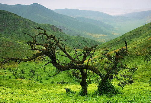 ¡100% Naturaleza! Full Day Lomas de Lachay - Chancay