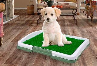 Baño para Perros Color Verde Tamaño S