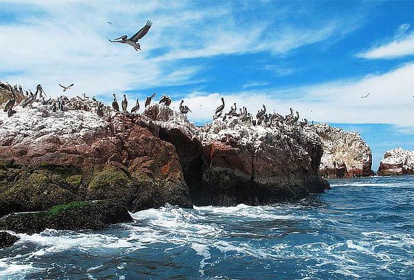 Full Day Paracas + Islas Ballestas y Más