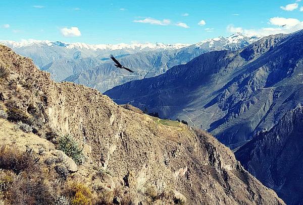 AREQUIPA: Tour Cañon Del Colca 2D/1N: Hotel, Desayunos y Más