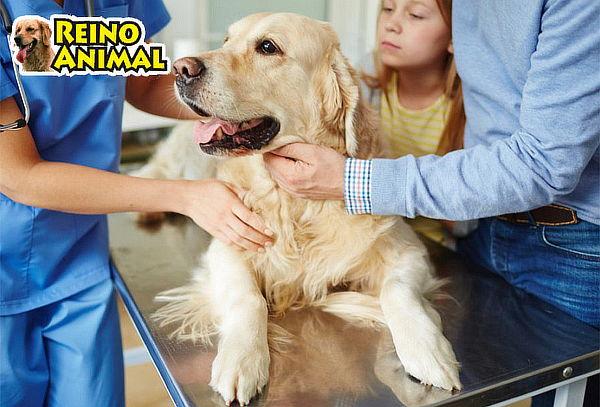 Tu Mascota - Consulta Médica + Baño y Más
