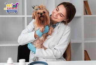 Consulta con Médico veterinario + Baño medicado y Más